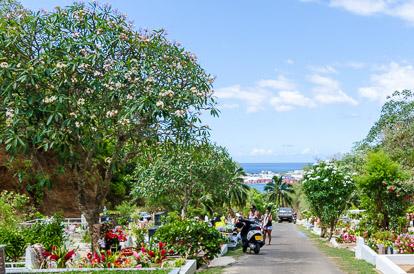 Les frangipaniers (tipanie) au cimetière de l'Uranie
