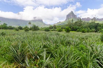 Route des ananas à Moorea