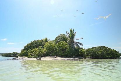 Mataiva: l'île aux oiseaux