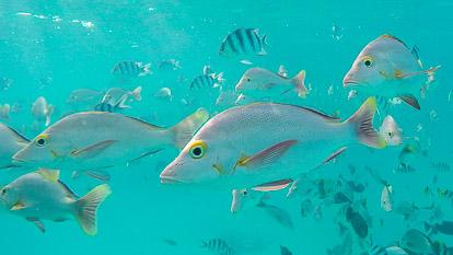 Rangiroa : l'aquarium